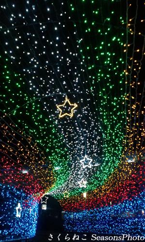クリスマスイルミ2013p.jpg