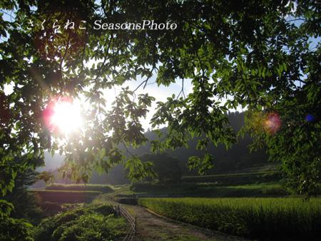 晩夏の田畑p.jpg