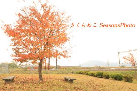 紅葉公園メルヘン風p.jpg