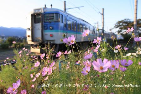 電車-白馬115系p.jpg
